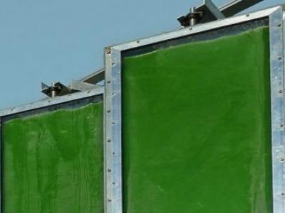 Painel solar de algas produz 5 vezes mais energia que modelos anteriores